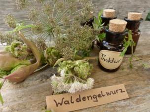 Waldengelwurz-Tinktur.jpg